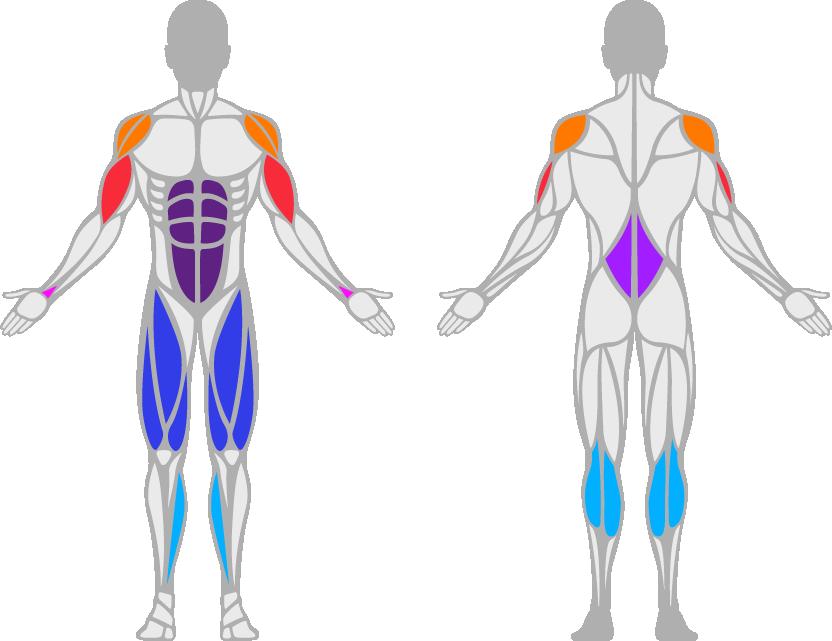 Diese Muskulatur wird beim Seilspringen verwendet